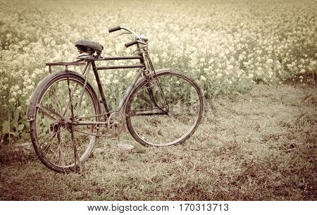 Vintage Bicycle beside a rural mustard field in Bangladesh