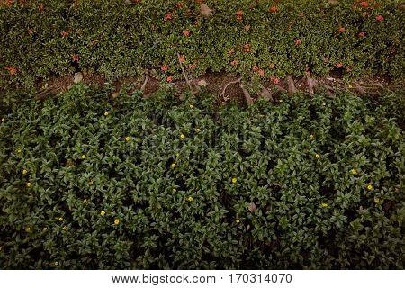 Garden Greenery Small Tiny Field