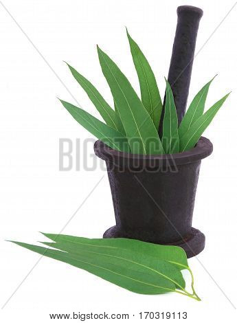 Eucalyptus leaves in a vintage mortar over white background