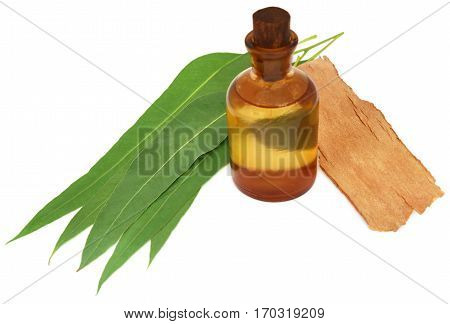 Eucalyptus Oil with leaves and bark over white background