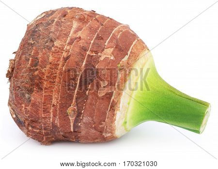 Edible root of colocasia over white background