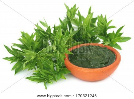 Buds of long coriander eryngium foetidum with paste in a bowl