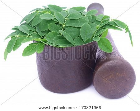 Edible moringa leaves in a vintage mortar over white background
