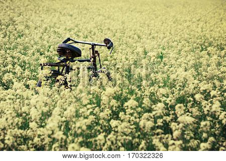 Vintage Bicycle in a rural mustard field of Southeast Asia
