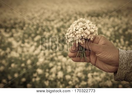 Hand holding mustard flowers outdoor in garden