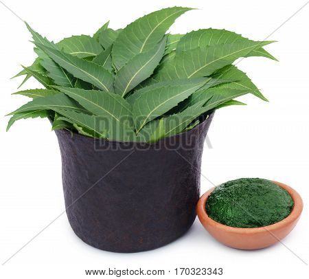 Medicinal neem leaves with ground paste in a bowl over white background