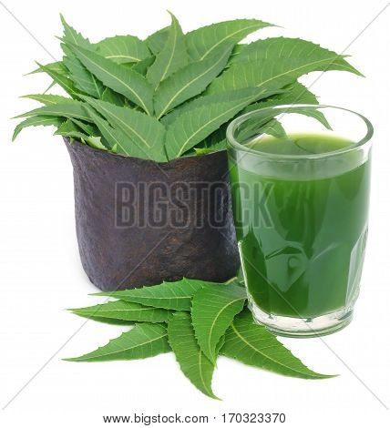 Medicinal neem leaves with extract in a glass