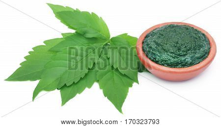 Paste of medicinal Vitex Negundo with green leaves