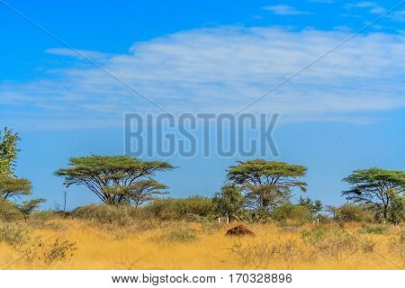 A view of african savannah with trees and bush