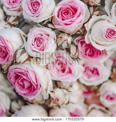 Vintage pink roses background, vintage decoration