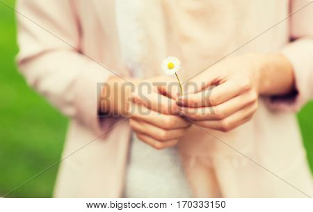 nature, summer and people concept - close up of woman hands with daisy flower