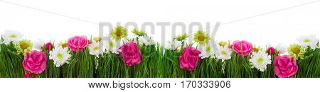 border of green grass and flowers isolated on white background