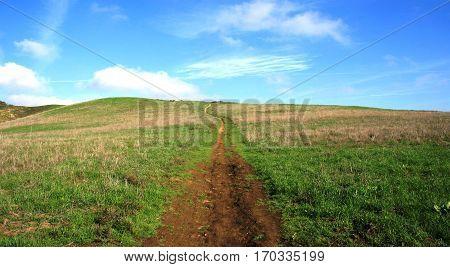 Path leading through a green meadow, California