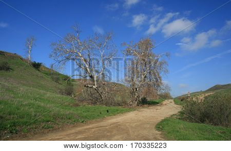 Dirt road running past sycamore trees in a canyon