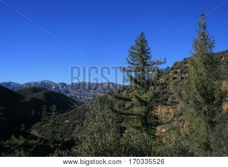 Panorama of pines and mountains, Lion Canyon, Ventura County, CA