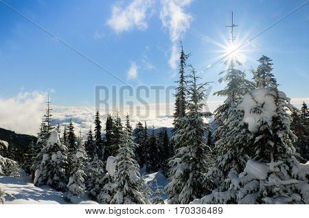 A Snowy Pine Forest Above the Clouds.  Olympic National Park, Washington.