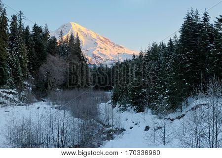 Sunrise Illuminates Mt Rainier from Longmire.  Cascade Mountains, Washington