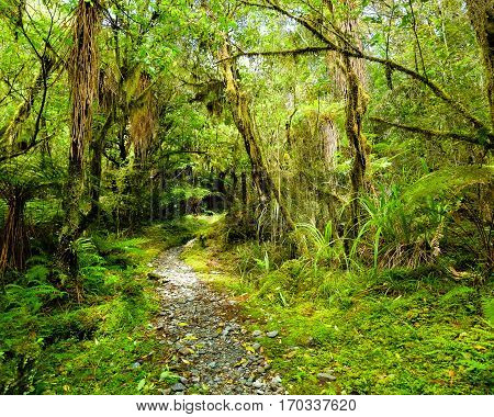 A Trail Through A Lush Green Rain Forest.  Franz Josef Glacier, Westland National Park, New Zealand