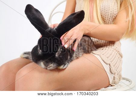 Woman sits on chair and strokes black funny rabbit in white studio, noface