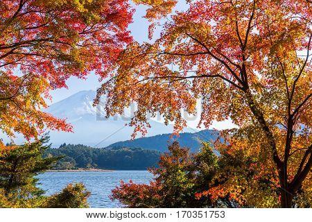 Lake Kawaguchi and Mount Fuji in Autumn season