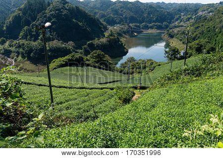 Tea plantation in the mountaintop