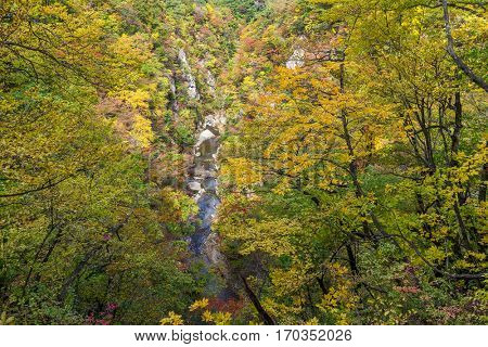 Naruko canyon in autumn forest