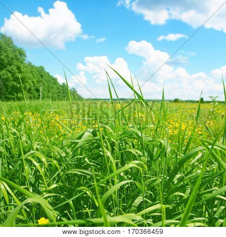 Summer landscape with field of grass and blue sky.