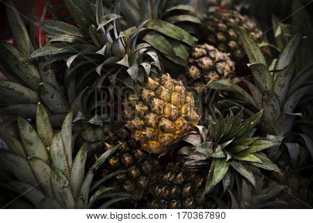 Pineapple Ananas Citrus Fruit Juicy Nutrition Pina