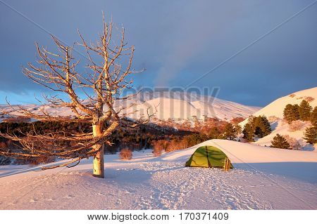 green tent and dead tree in the morning light of winter Etna Park, Sicily