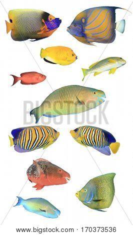 Reef fish isolated. Tropical fish on white background. Angelfish, Bigeye fish, Sweetlips fish, Parrotfish.