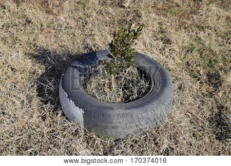 Using the old tread wheels to protect the trees and bushes. Landscaping.