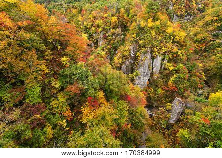 Naruko canyon with autumn foliage in Japan