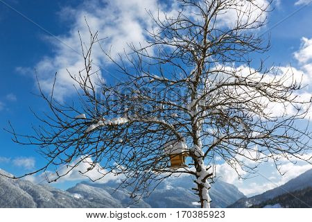 Snow on roof of wooden bird feeder hanging on leafless tree branches during winter in Austria, Europe with mountain and blue sky view