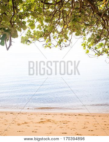 Beach and calm ocean blending into overhanging tress