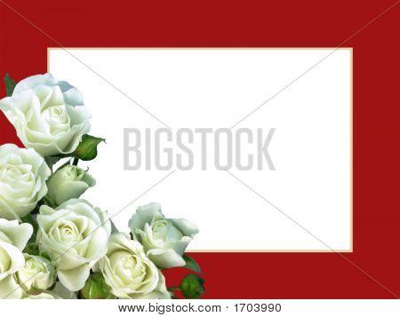 White Roses On Red Frame - Horizontal