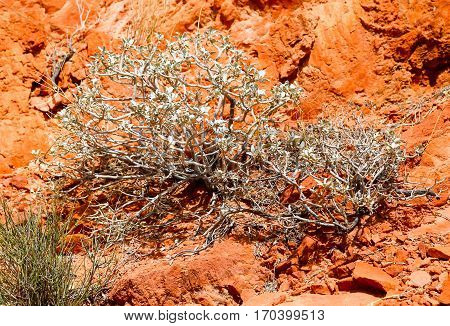Little Bush in the Rocks in the Valley of Fire State Park in Nevada, USA