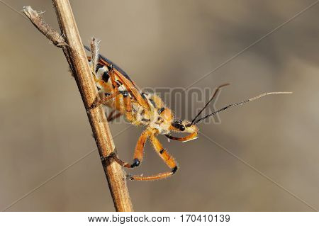 Closeup of the nature of Israel - bug on a branch