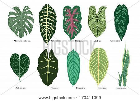 Colorful exotic leaves vector set. Isolated on white.