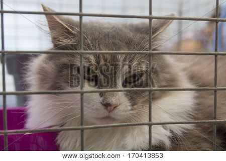 Homeless cat in a cage at the animal shelter