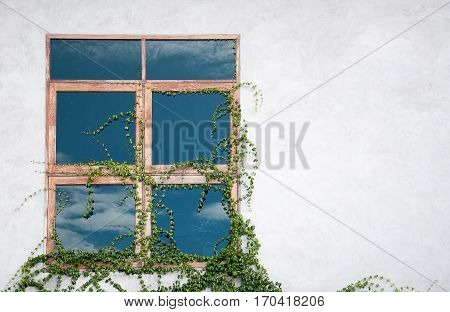 Window glass reflecting sky and ivy plant