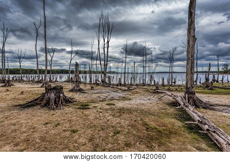 Dead Trees in the forest around a lake with low water levels. This photo depicts drought conditions and Climate Change. Location is Manasquan Reservoir New Jersey.