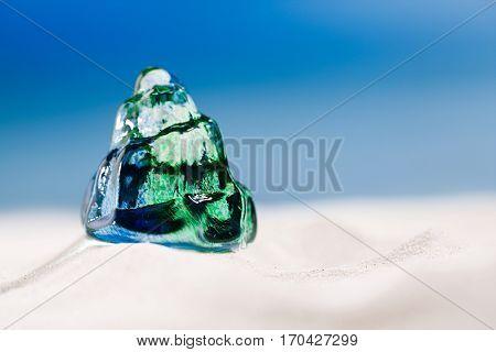 glass tropical sea  shell on white  beach sand under the sun light, shallow dof