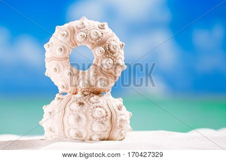 urchin shell starfish with ocean, on white sand beach