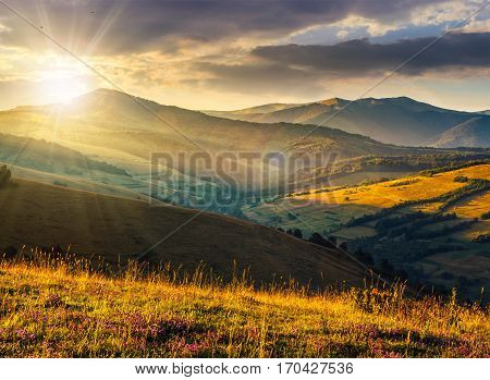 Wild Flowers In The Grass On Hillside At Sunset