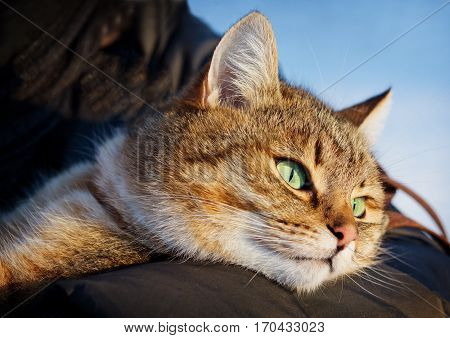Girl is holding her beautiful red cat outdoors. Walking in park.