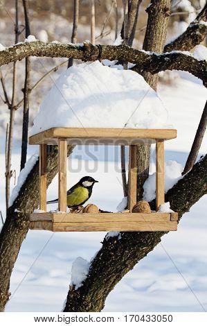 Chickadees (Paridae) is sitting on handmade bird-feeder with crumbs and nuts winter scene