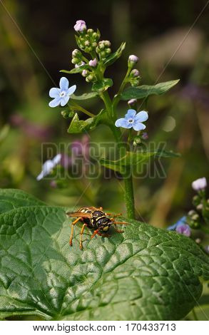 Wasp Under Blue Flowers