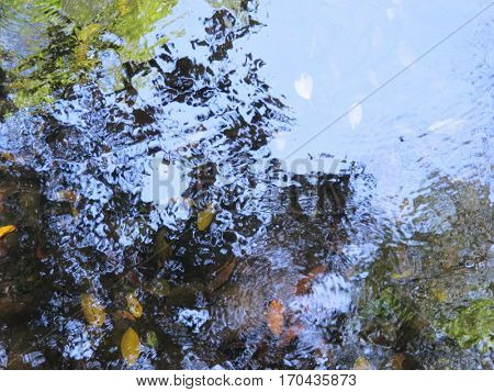 Rain Forest Water Reflections 2