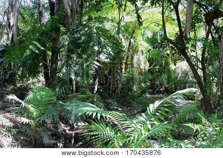 Australian Rain Forest with Creek 1