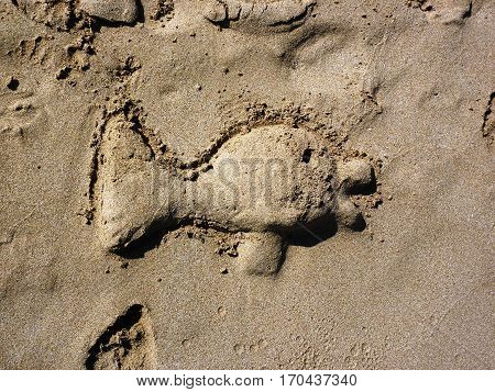 Sand fish on tropical white sandy beach. Sand background. Beautiful sand background. Sand Texture background. Closeup of sand.